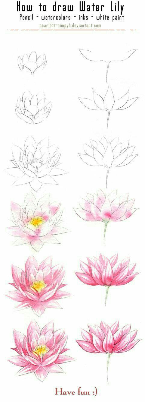 Dessiner Une Fleur De Nenuphar Art Drawings Painting Watercolor
