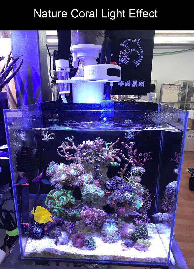 Mini Reef Aquarium Reef Aquarium Aquarium Coral Reef Aquarium
