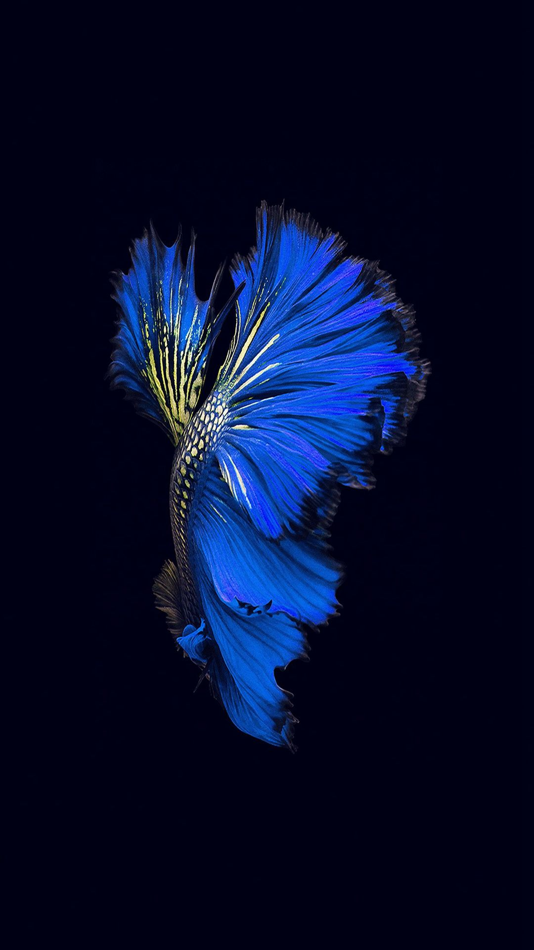Wallpaper iphone cupang - Apple Ios9 Fish Live Background Dark Blue Iphone 6 Wallpaper