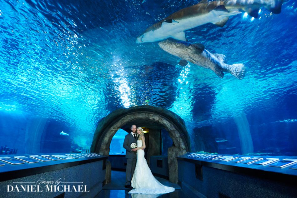 Newport Aquarium Wedding Photography