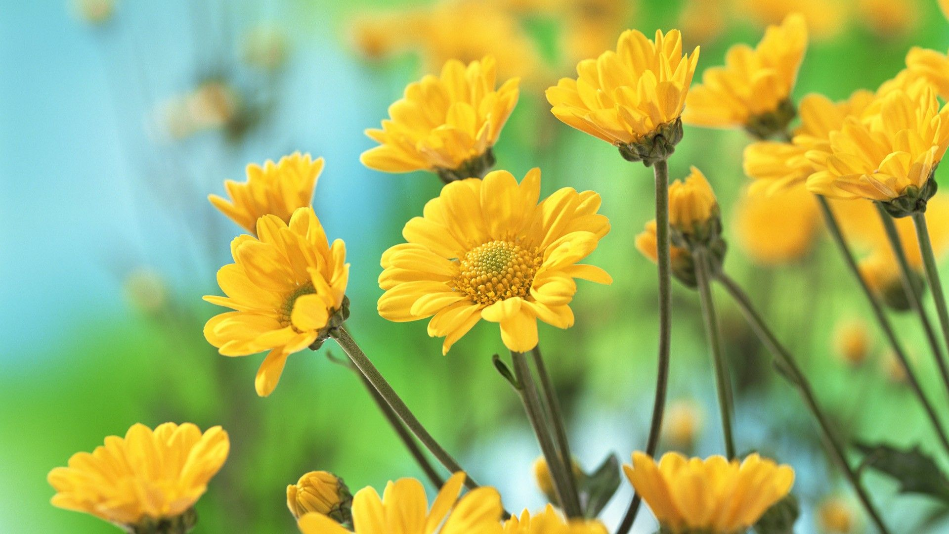 yellow flowers pictures widescreen 2 hd wallpapers | things i love