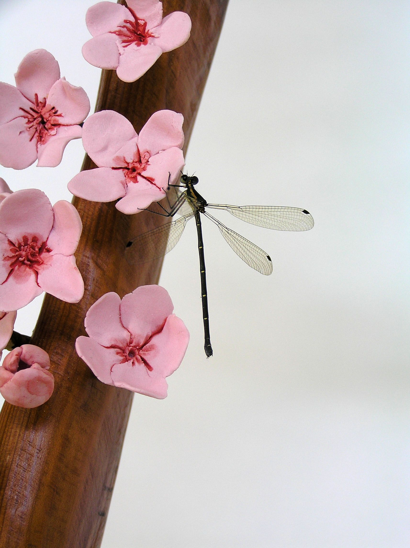 Helen Earl, Detail of Spring Walk ladder artwork and a chance encounter with live dragonfly.