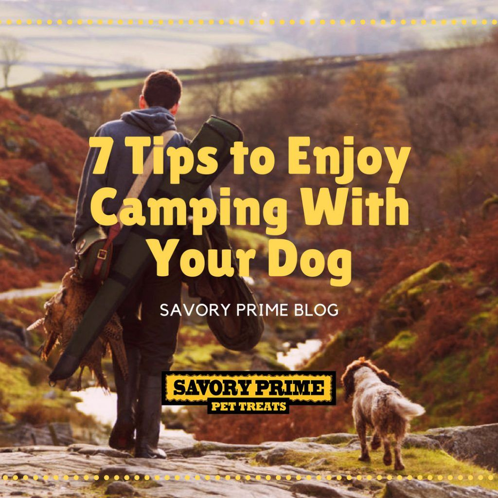 7 Tips To Enjoy Camping With Your Dog