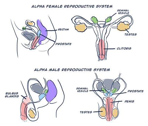 super alpha beta prostate