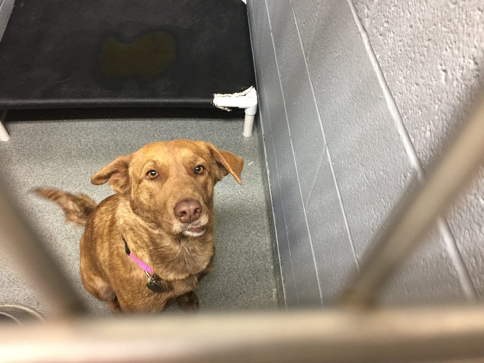 TO BE KILLED JUNE 19, 2017 A34992557 1 YR. OLD FEMALE
