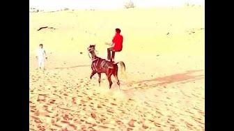 Egypt Horse - YouTube