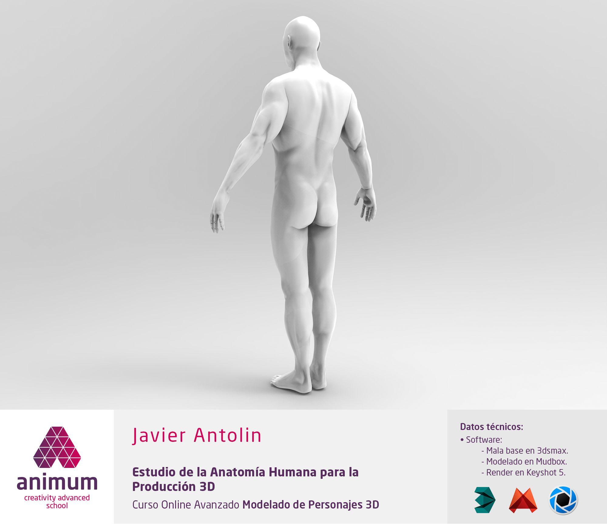 Estudio de anatomía humana para producción 3D. Vista 3/4 posterior ...