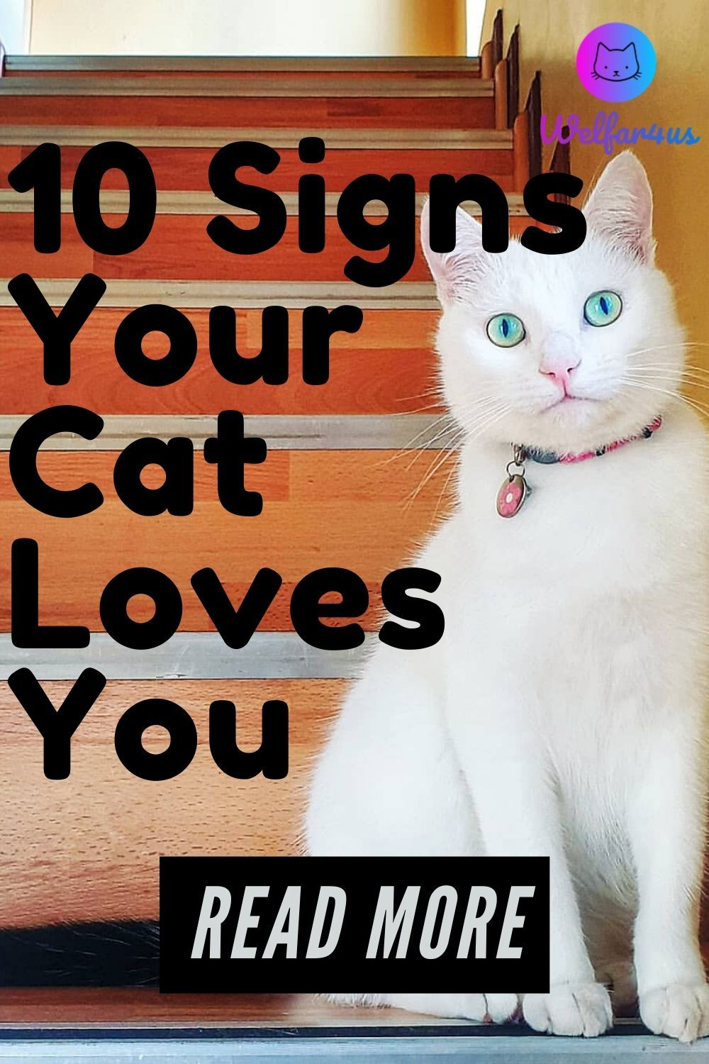 10 Signs Your Cat Loves You Welfar4us In 2020 Cat Love Cute Cats Cat Life Hacks