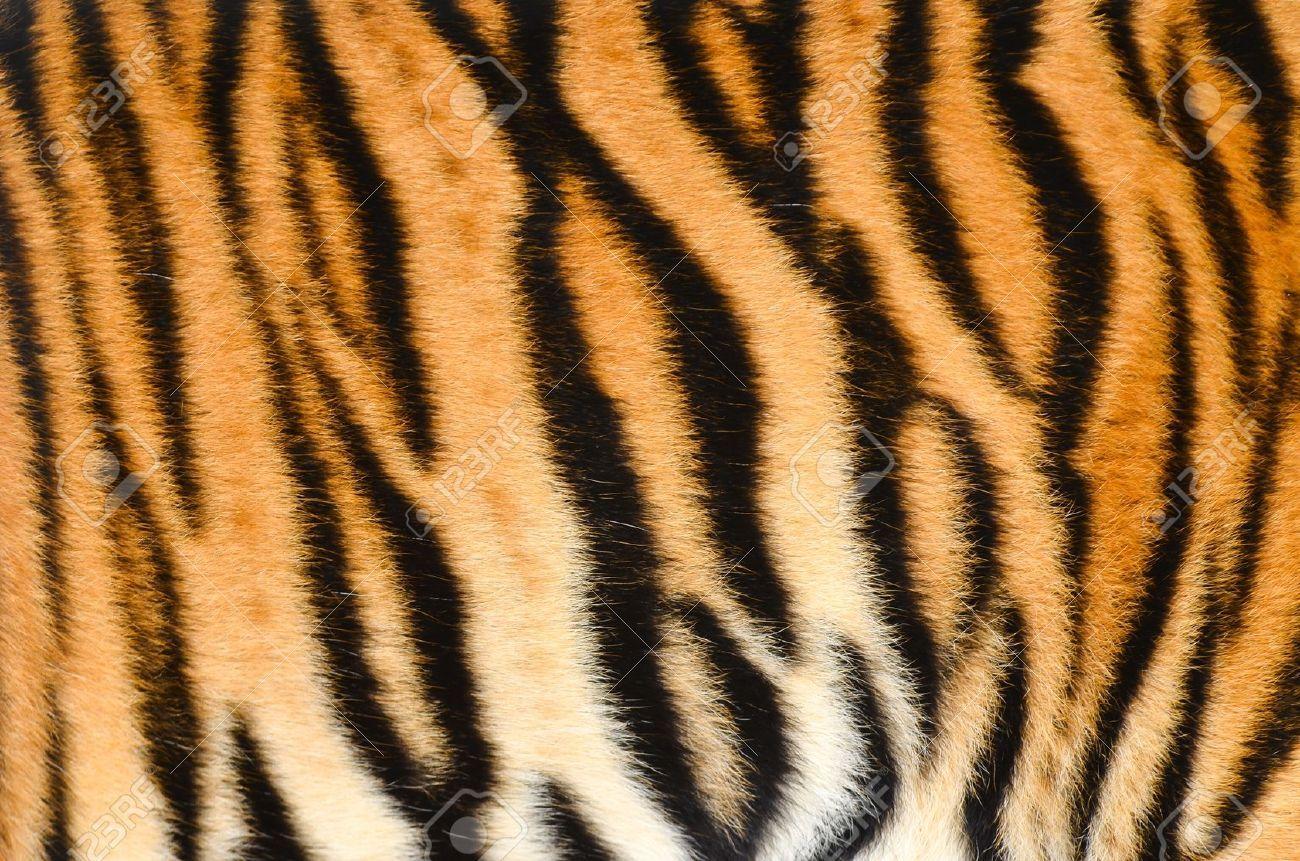 Tiger fur texture. | Tiger | Pinterest | Tiger fur and ... - photo#12