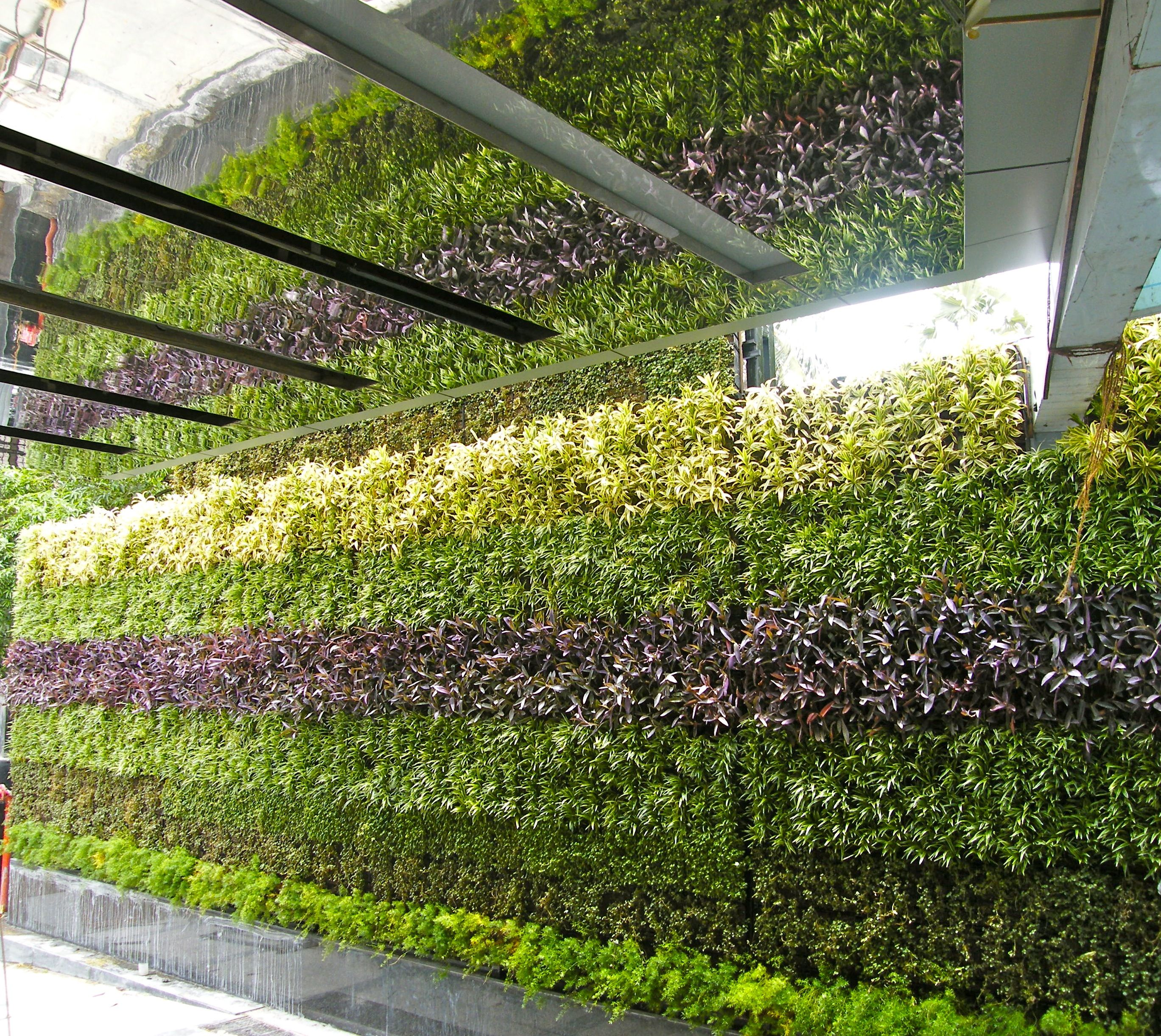 Vertikale Garten: Vertical Garden In Mumbai , India