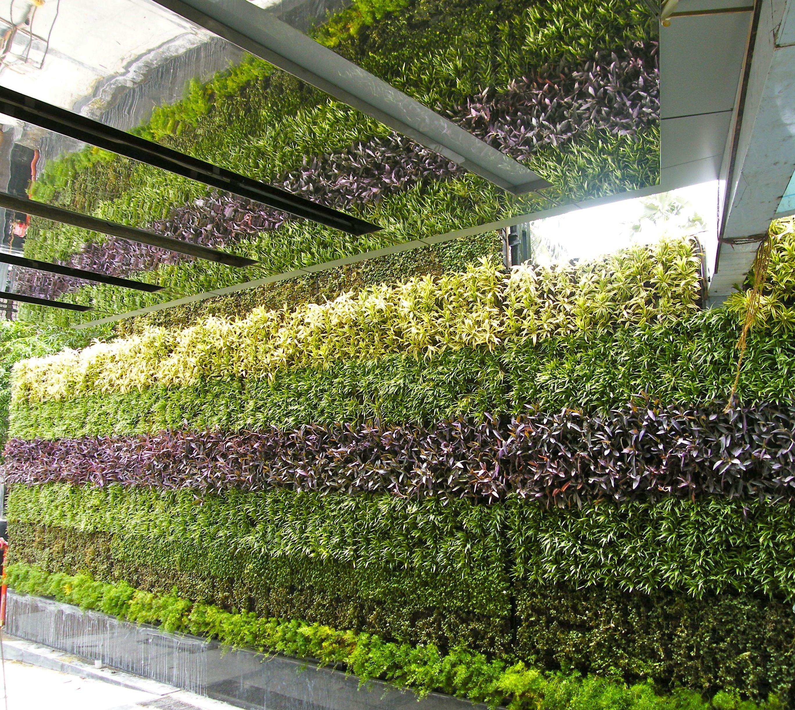 Vertical garden in mumbai india vertical gardens for Garden house in india
