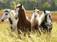 No matter how i see them, Horses make me happy!  The freedom and spirit they portray just makes my heart feel lighter!