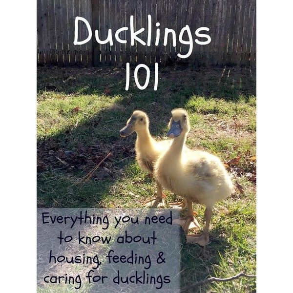 Pin By Kathy Grim On Poultry Keeping