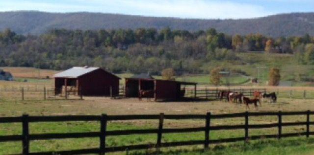 Horse farm near Winchester