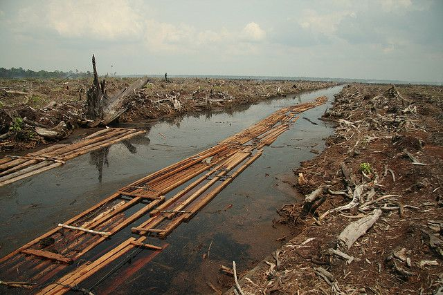 THE PROBLEM WITH PALM OIL Palm Oil is one of the most widely used products worldwide. The use of palm oil is not the problem, but rather the way we farm it is. | www.frontiergap.com | #nature #PalmOil #news #conservation #ecology