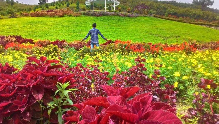 Wisata Taman Taman Bunga Sapo Juma Taman Bunga Taman Bunga