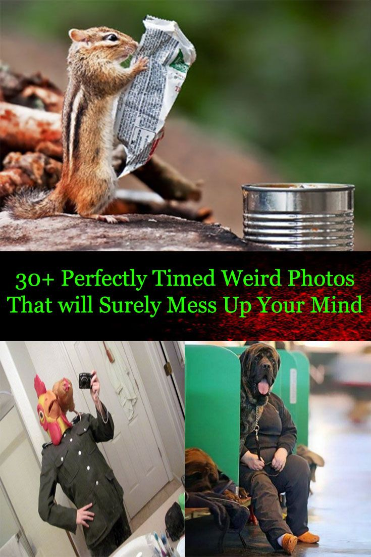 56 Perfectly Timed Photos That Will Mess With Your Mind