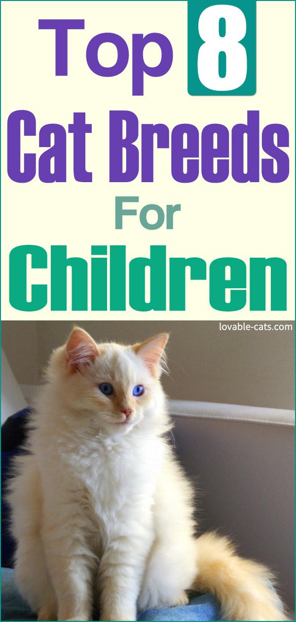 Top 8 Cat Breeds For Children in 2020 Cat breeds, Cats