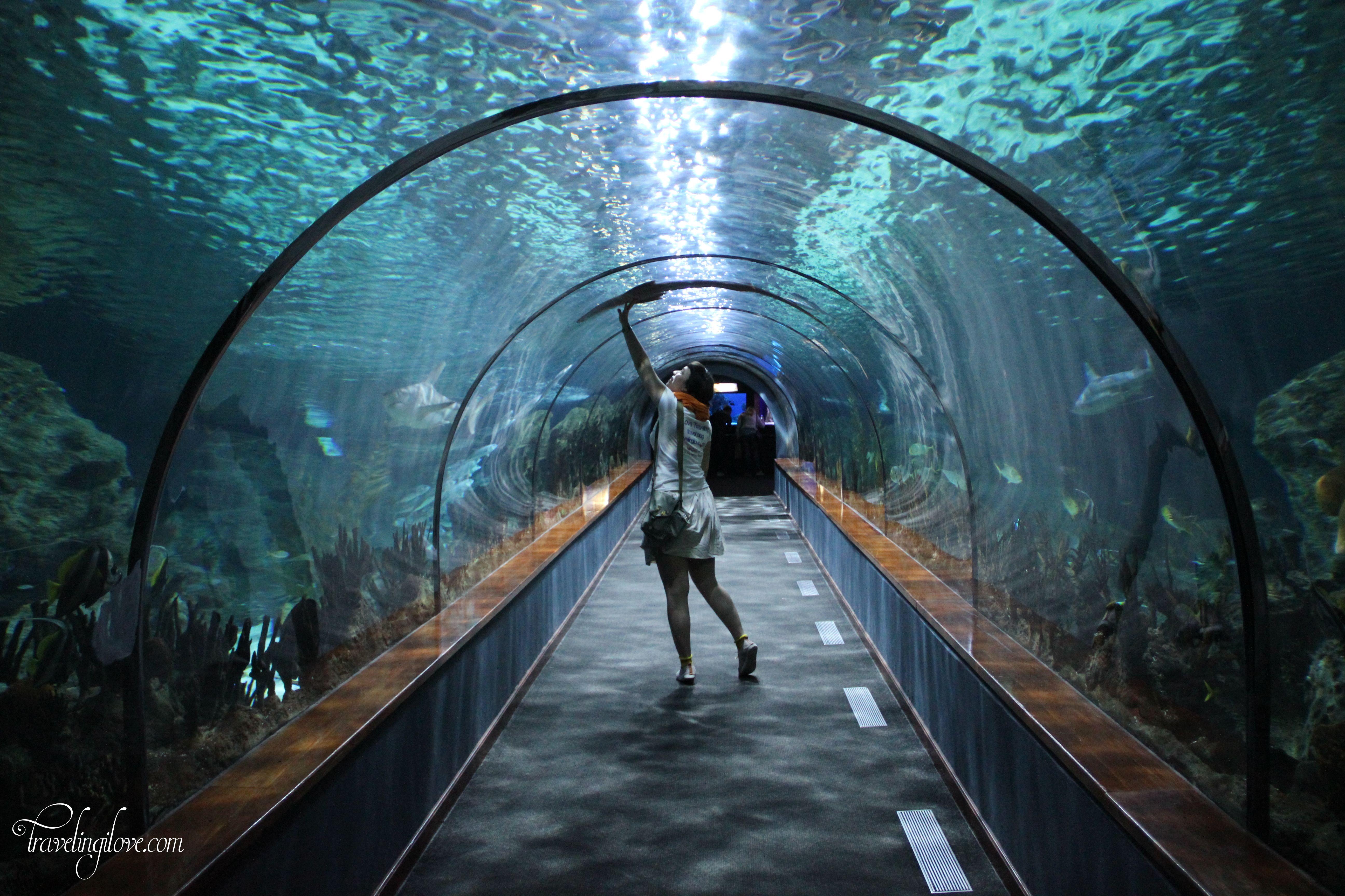 Loro Parque Aquarium Tenerife Travelingilove Practical Travel Cultural Destinations Travel Blog