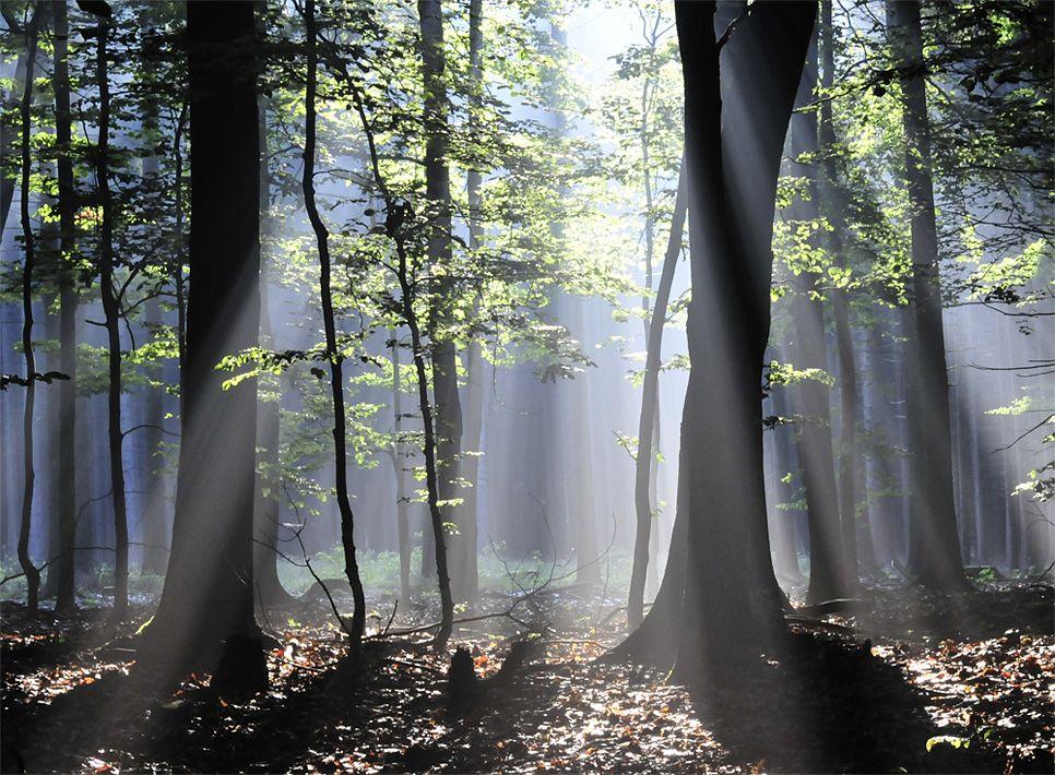 Bäume frühling Gegenlicht Lichtstrahlen Sonne Wald