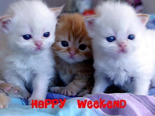 Картинки по запÑ€осу happy weekend cat