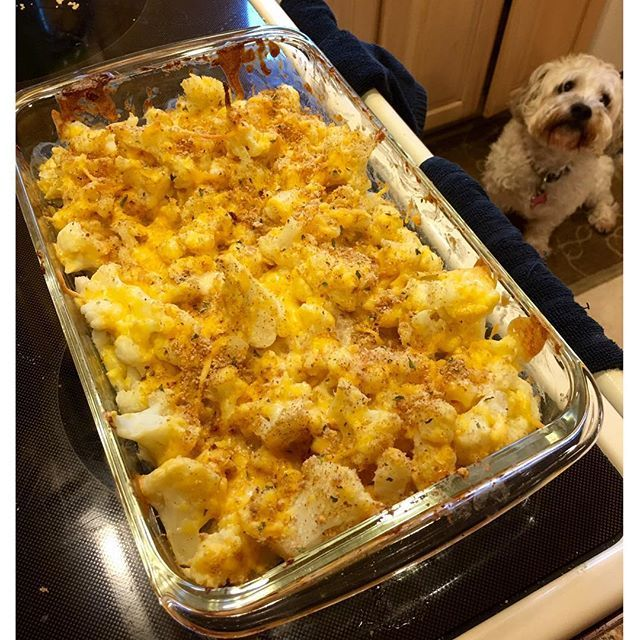 Either Harley can smell the cheese or she just wants a treat😂🐶 Cauliflower Mac N Cheese! 🧀🧀 Recipe from @theproteinchef YouTube channel📽 Mac N cheese is my all time favorite comfort food since as long as I can remember so this hit the spot😍 Full recipe will be in the comments and on my blog soon too! 1/4 of entire recipe has 18P, 11C, 3F, 3 Fiber . . . #lowcarb #macncheese #cauliflowermacandcheese #theproteinchef #comfortfood #healthy #iifym #flexibledieting #foodie #foodporn…