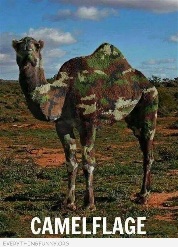 funny caption camelflage camel painted