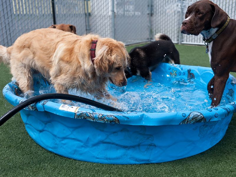 Daycare? Or day the pool? Dog daycare, Daycare