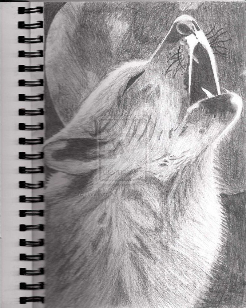 Howling Wolf Drawing by JanineArtWoohoo on deviantART ...