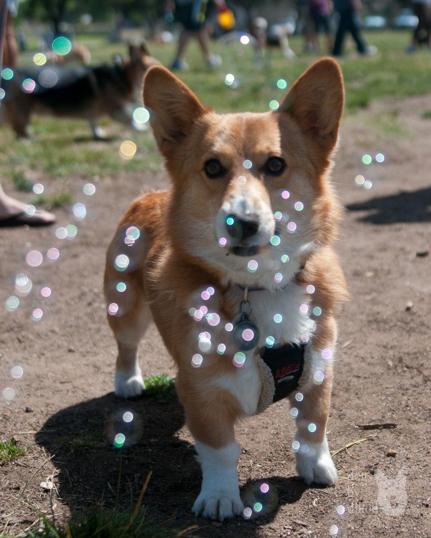San Diego, California, USA Crazy dog lady, Crazy dog