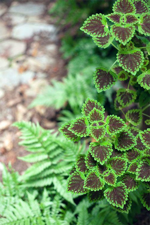 Wit Whistle Gardening Tips Growing Grass Garden Soil
