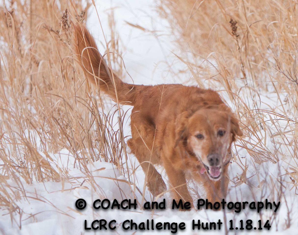 LCRC Challenge Hunt 1/18/2014