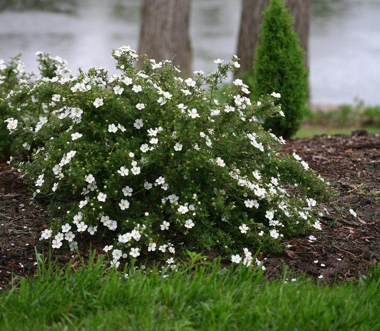Plantas de jardín - 6 arbustos y consejos sobre cómo cuidar de ellos