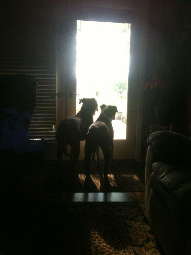 Bella & Luke