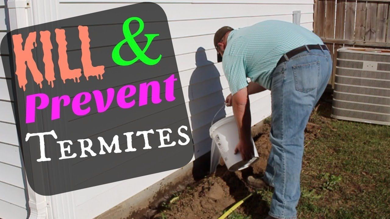 HOW TO PREVENT & KILL TERMITES DIY AT HOME YouTube