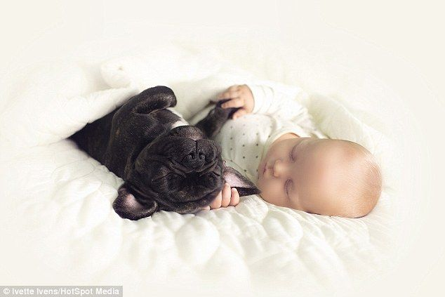 Little Boy And His French Bulldog Nap Eat And Even Bathe Together
