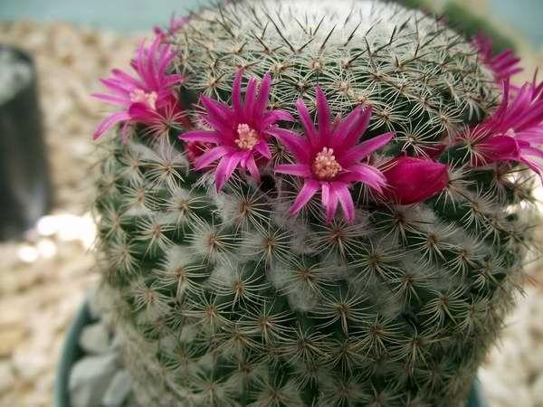 Cactus suculentas jardin botanico cuba 00 foto abel rojas for Curso cactus y suculentas