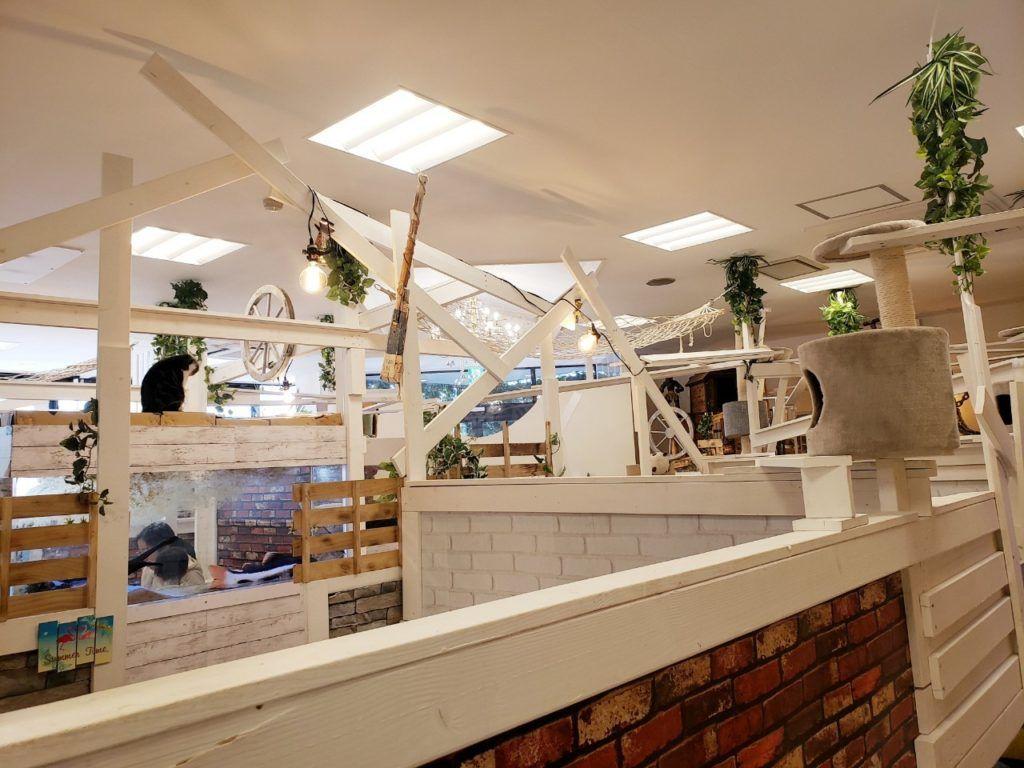 2020年版 猫カフェねこのす千葉東金店体験レポート 動物カフェ
