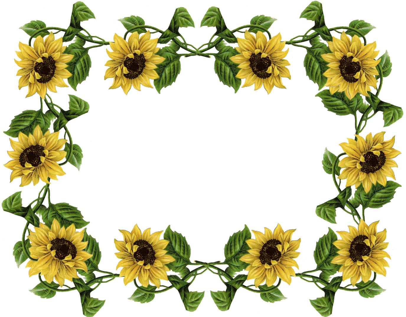 Sunflower Clipart Border in 2020 | Clip art borders ...