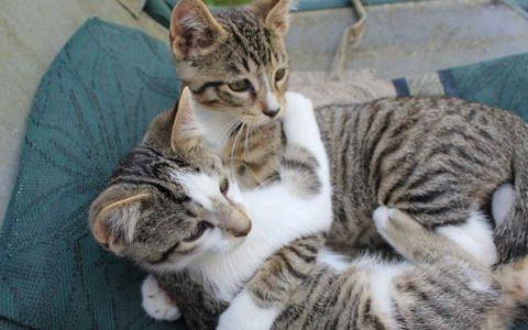 Kitty Kindness Week
