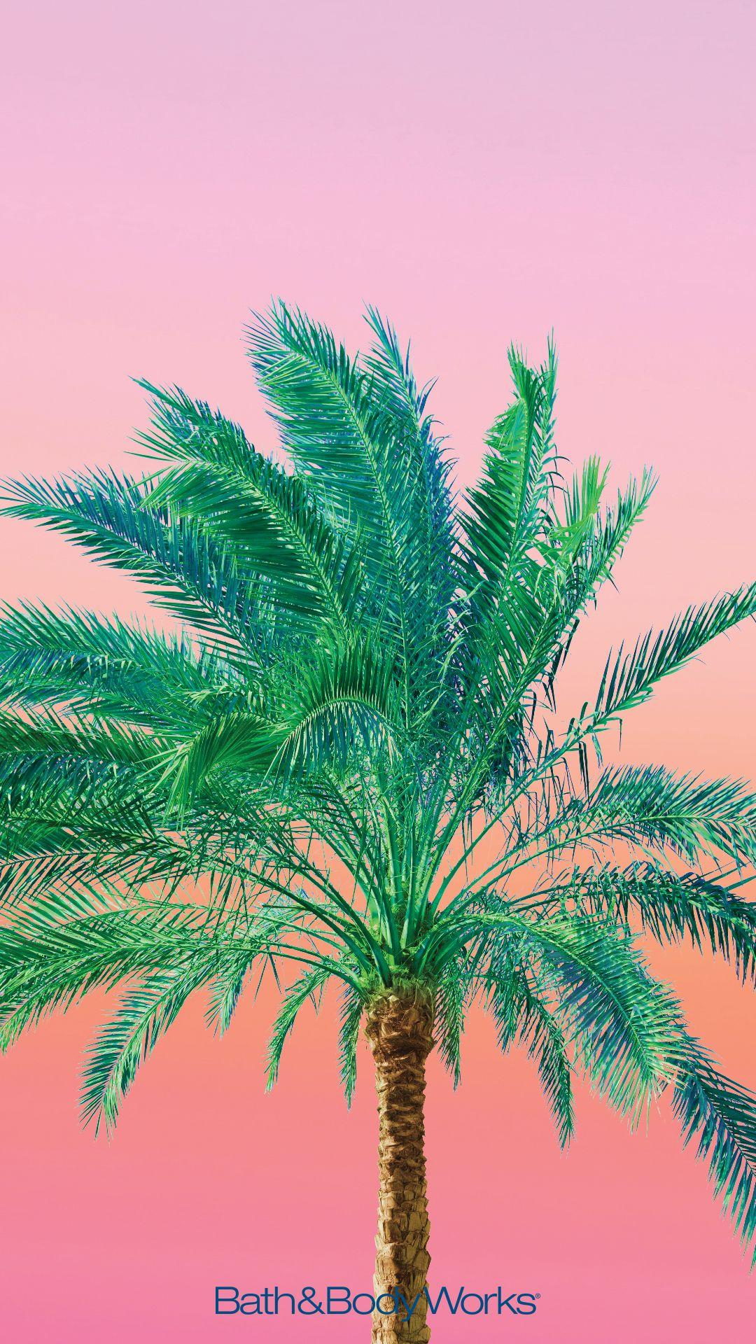 Palm Trees Cell Phone Wallpaper Background (mit Bildern