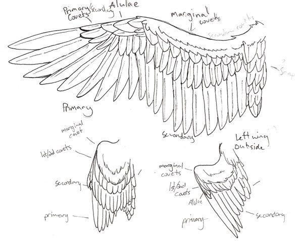 Anatomy of wings