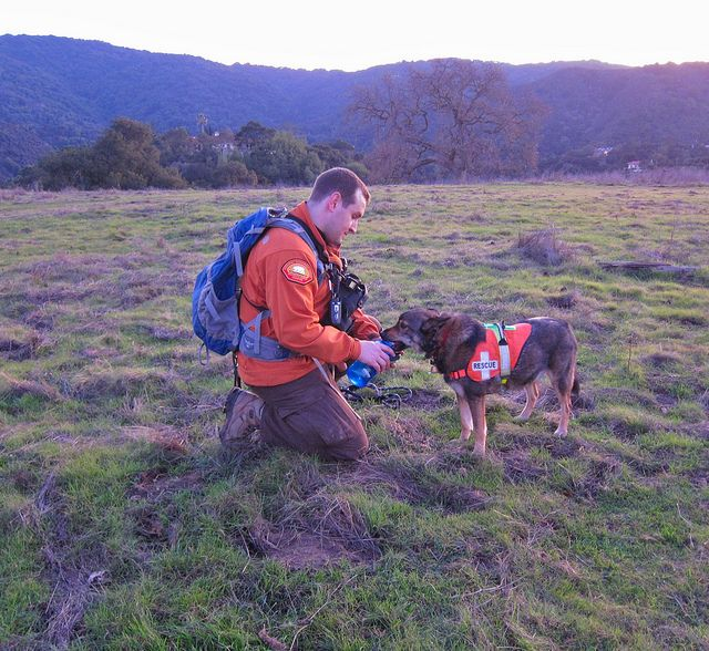 How to Prepare Your Dog for Camping | Service dogs, Dog ...