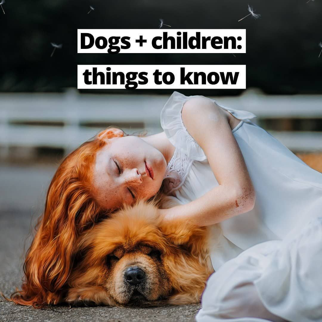 First things first what is the best time to get a dog for