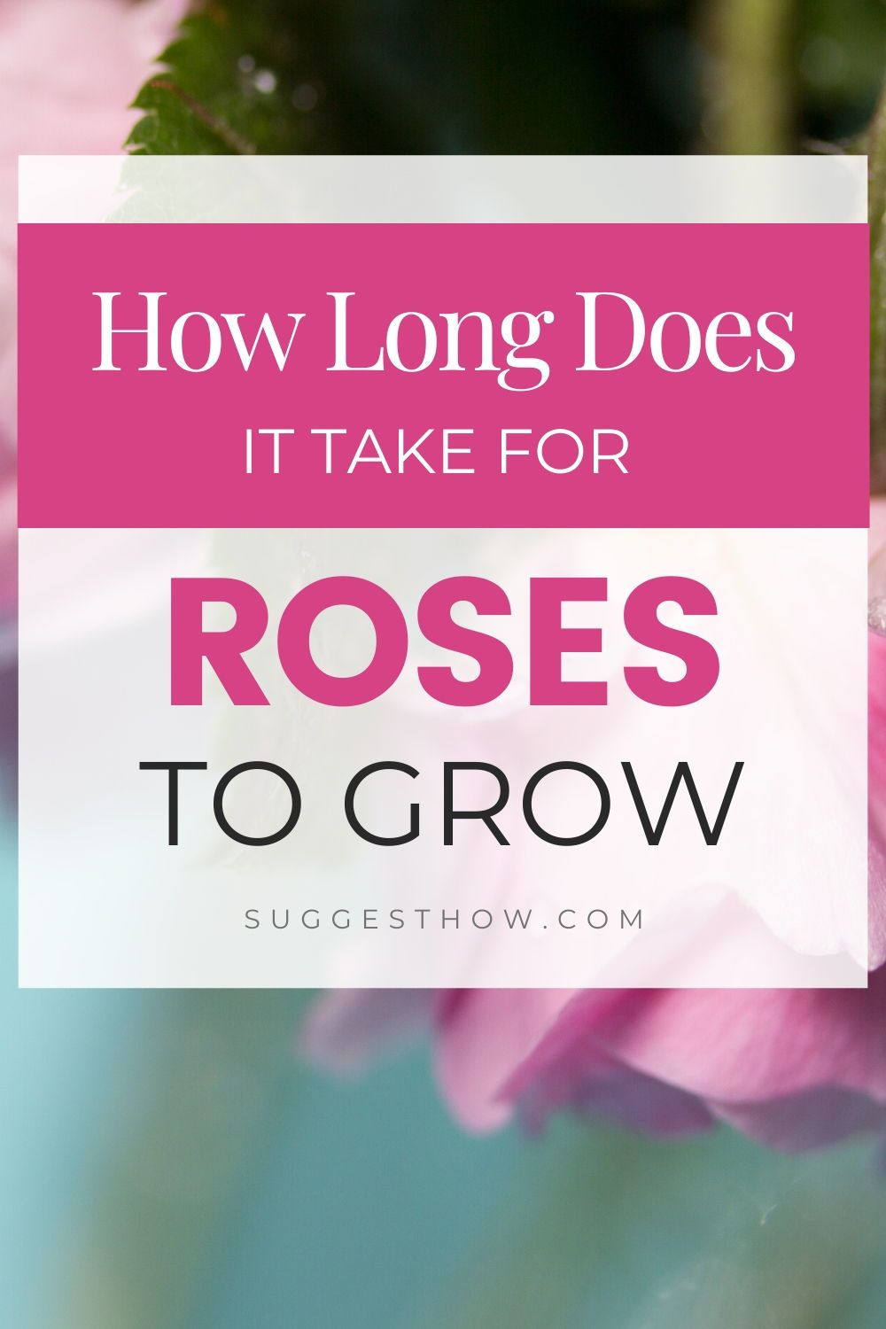 How long does it take for roses to grow in 2020 growing