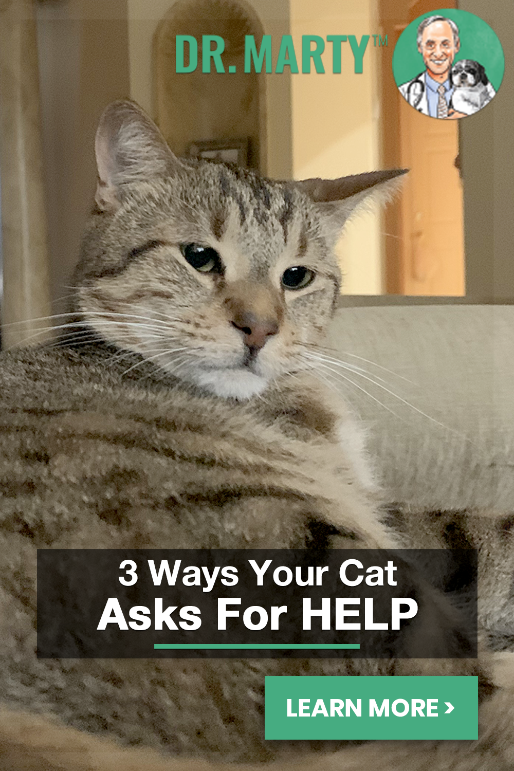 3 Ways Your Cat Asks For Help Cat Advice Cats Cat Facts