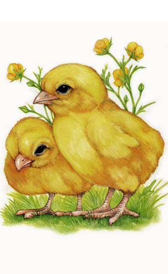присутствовала милые картинки цыплят нарисовать этом сайте можете
