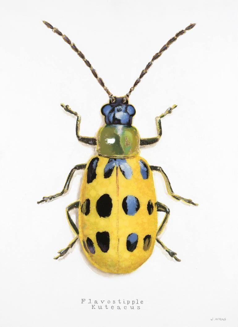Carabidae-RARE from Tanzania,UNMOUNTED beetle