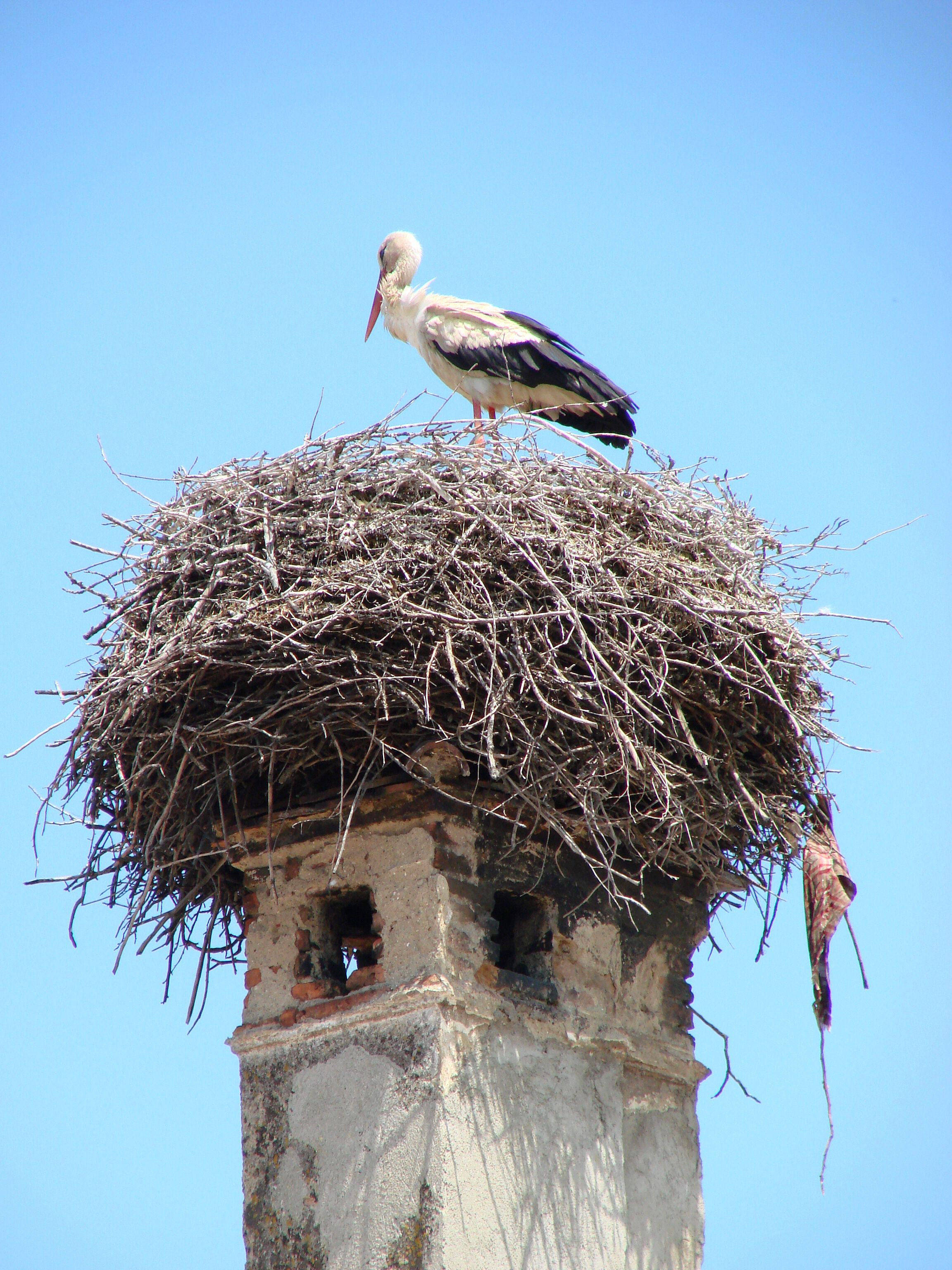 A Stork Nests In An Ancient Chimney Harman Romania