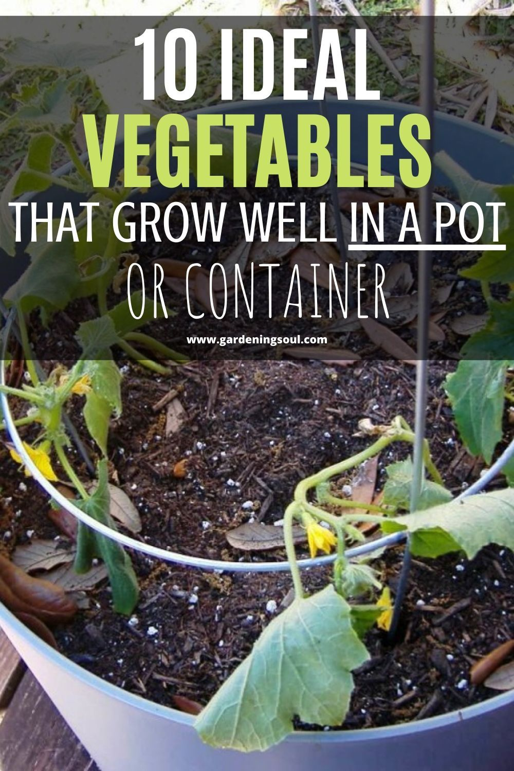10 Ideal Vegetables That Grow Well In A Pot Or Container